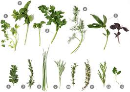 Herbs Found in Ecuador #1 – A Parsley Recipe