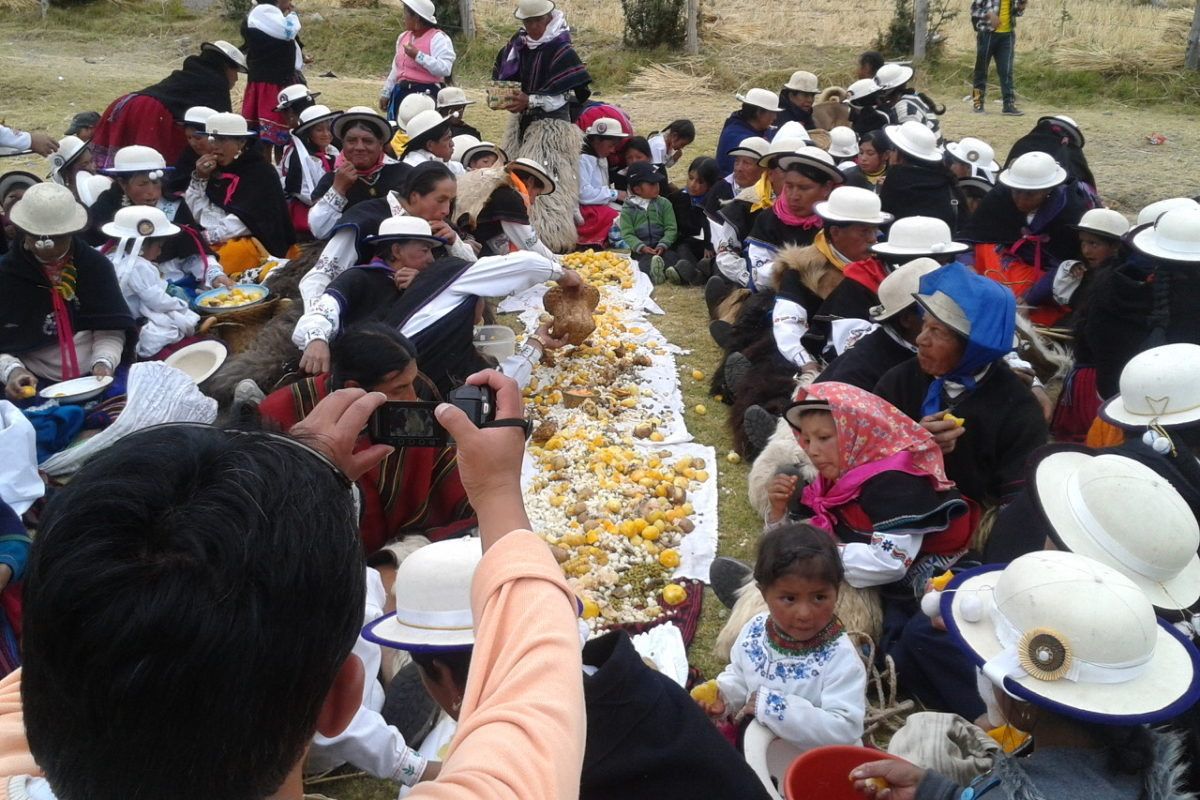 Asociación Mushuk Yuyay: Fair Purchase of Cañari 2020 Native Grain Harvest